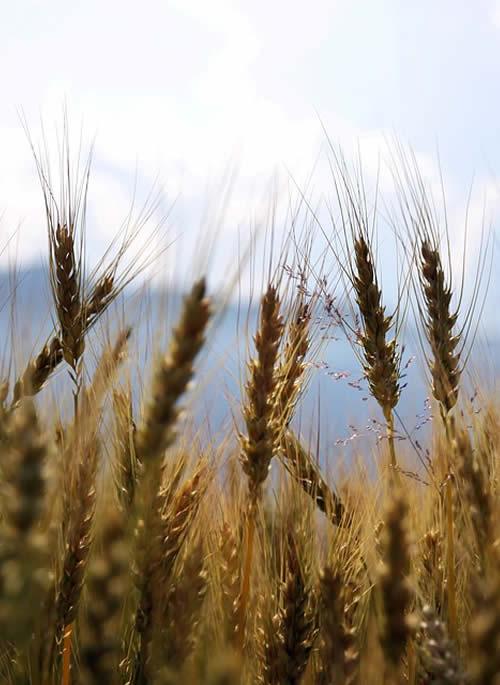 SAECA - Sociedad Estatal de Caución Agraria